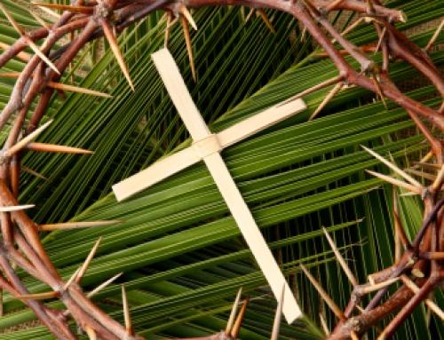 Sante Messe, Domenica delle Palme